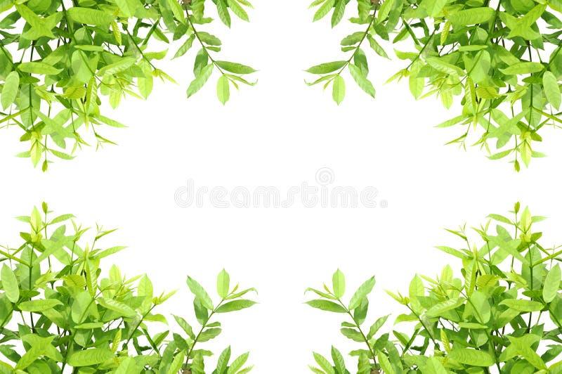 leaves frame stock illustration
