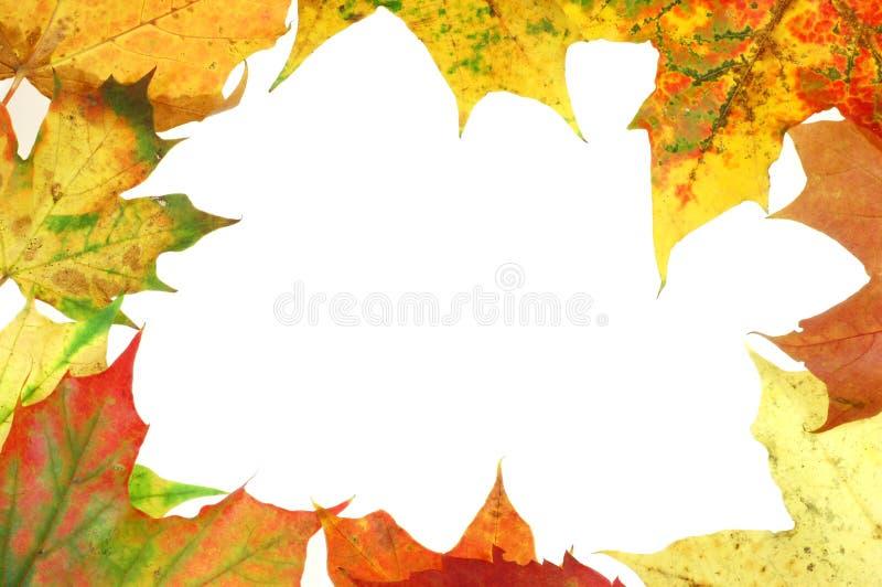 Leaves frame #3 stock photo
