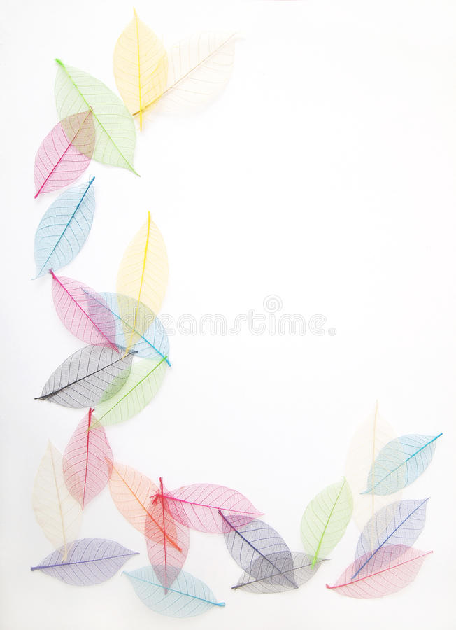 Leaves frame in pretty colors royalty free stock images