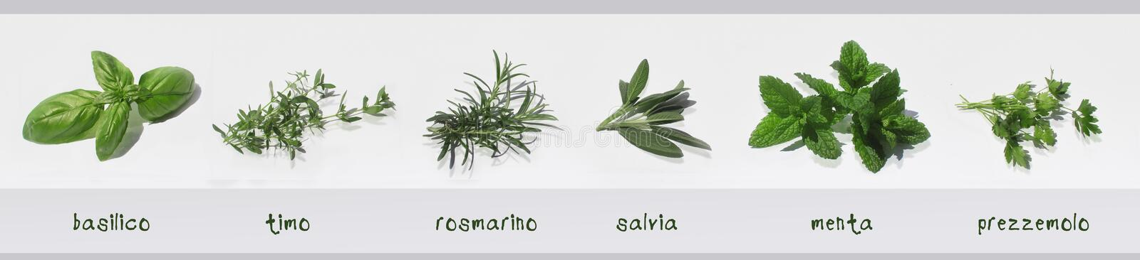 Spices fresh herbs isolated with their names in Italian: basil, thyme, rosemary, sage, mint, parsley stock photos