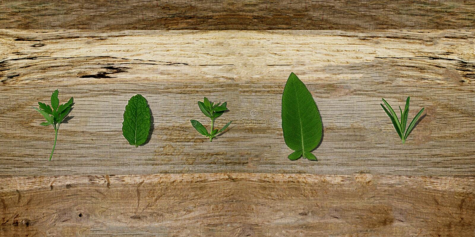 Fresh aromatic spices - fresch herbs on wood. Parsley-mint-thyme-sage-rosemary. Leaves of fresh herbs or aromatic spices: parsley, mint, thyme, sage, rosemary stock images