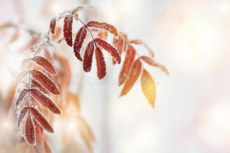 Leaves in the frost royalty free stock photos