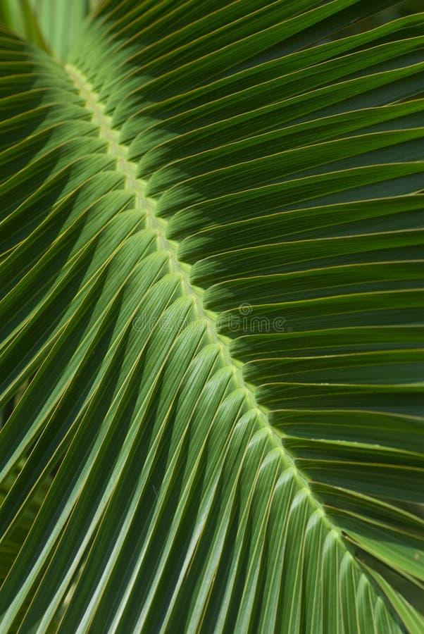 leaves gömma i handflatan den tropiska modellen arkivfoto