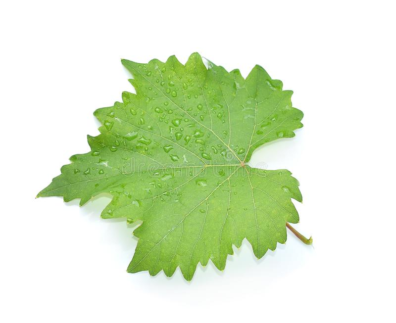 Leaves grape isolated on white background stock image