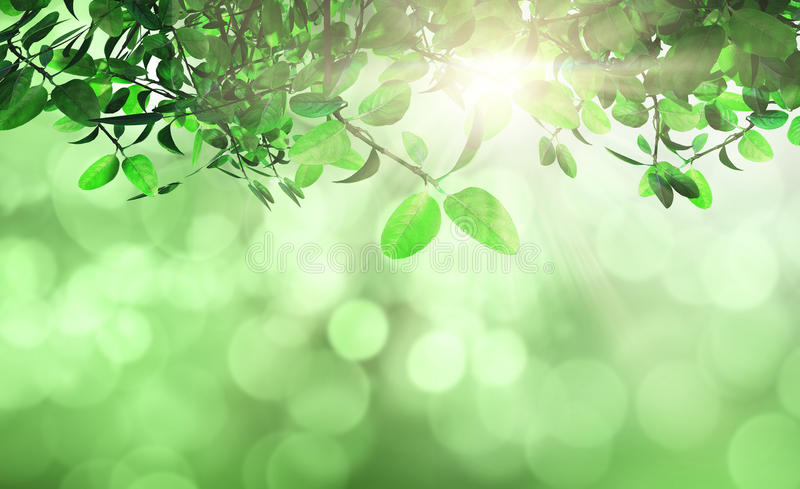 Leaves and grass against a defocussed background stock illustration