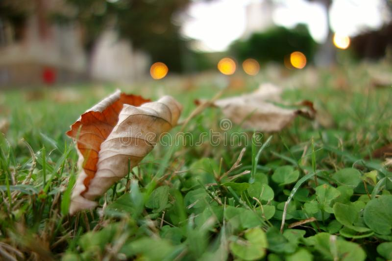 Leaves in the grass royalty free stock photography