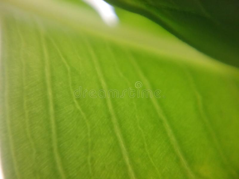 Leaves green stock images