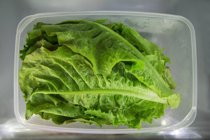 The leaves of green salad in the plastic container on a shelf of a fridge. royalty free stock photography
