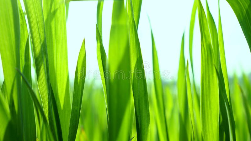Download Leaves stock photo. Image of macro, spring, growth, abstract - 38895644