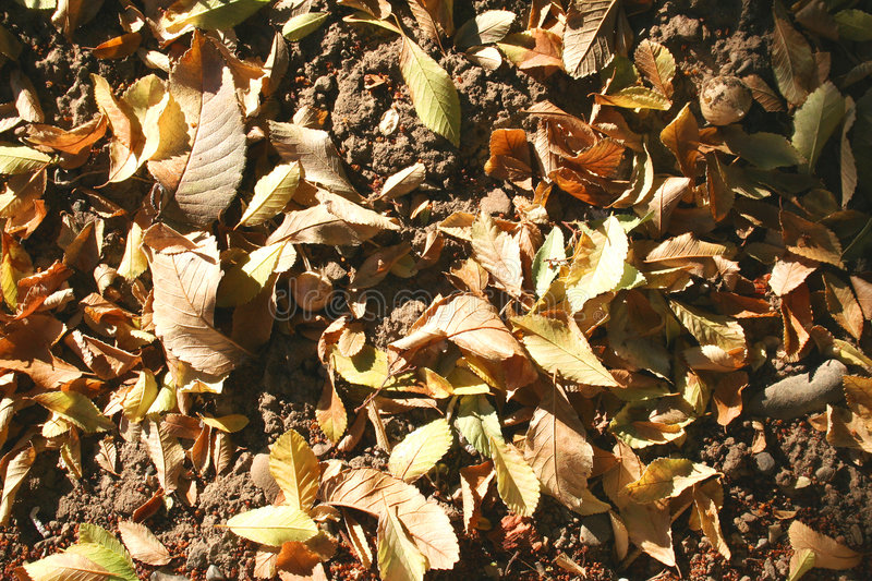 Leaves on the ground stock image