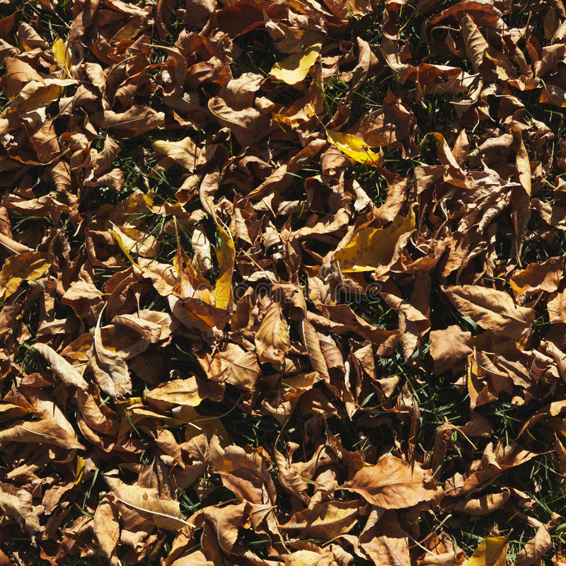 Leaves on ground royalty free stock image
