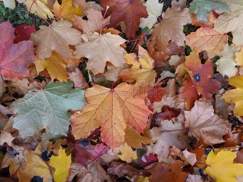 Leaves on the ground on fall with nice colors stock photos
