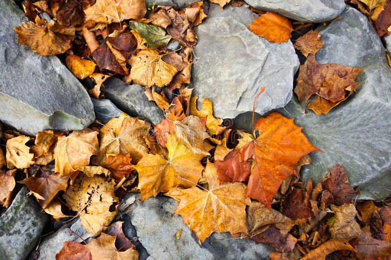 Leaves on groung stock photography
