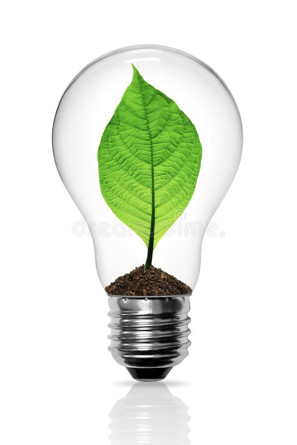 Leaves grow in a light bulb royalty free illustration