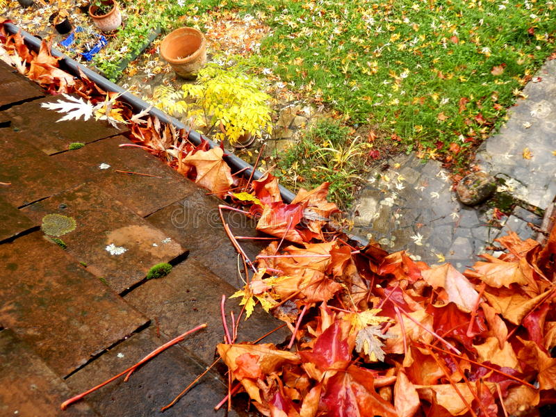 Leaves in the gutter. Gutter full of leaves following leaf fall in Autumn stock photo