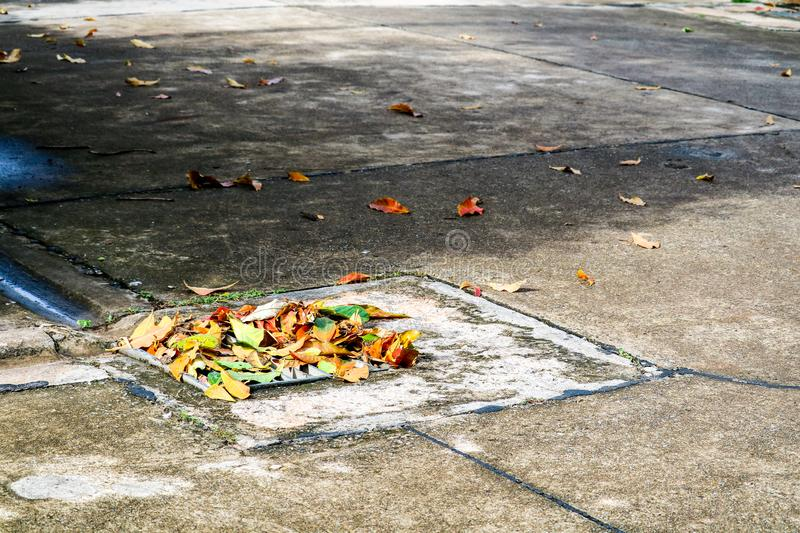leaves has fall after heavy rain Drain drainage area cause flood royalty free stock photo