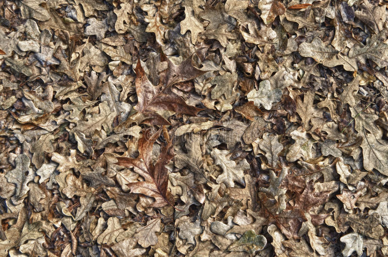 Download Leaves in HDR stock image. Image of leaf, foliage, colour - 19006833