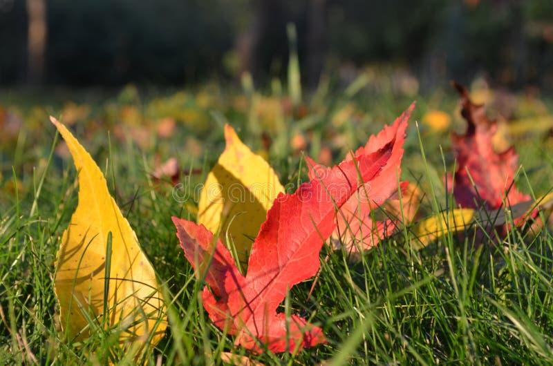Leaves i gräset royaltyfri fotografi