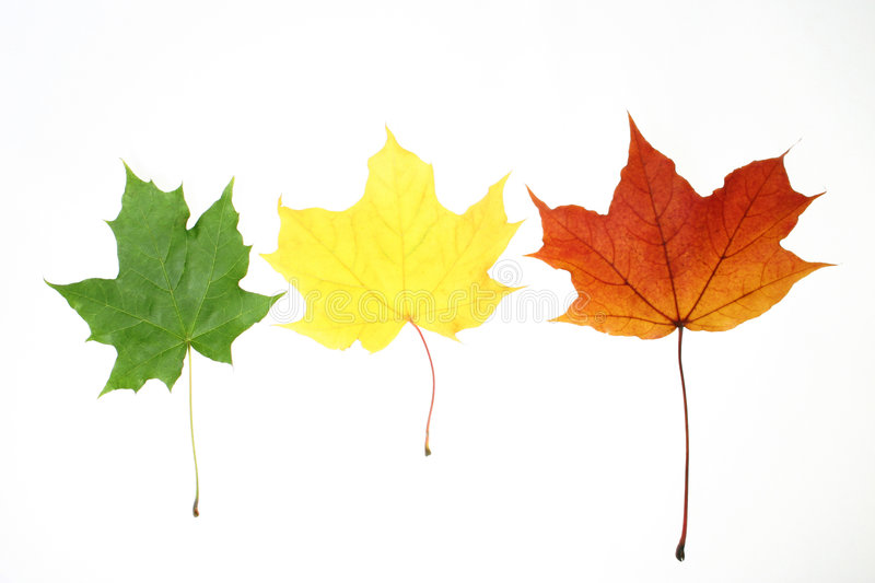 Leaves isolated stock photography