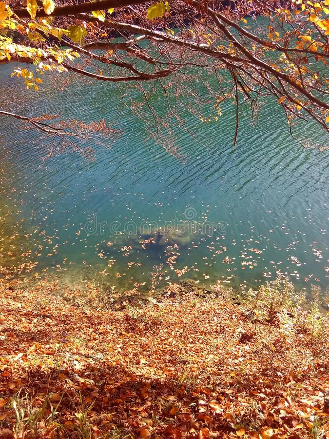 Leaves on the lake stock photos