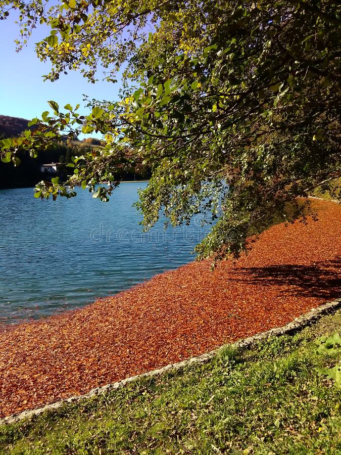 Leaves on the lake stock image
