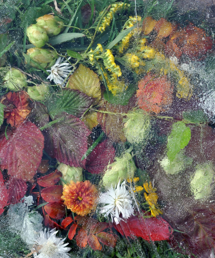 Leaves, leaf, flowers, grass under ice royalty free stock images