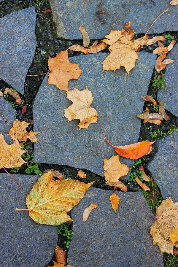 Download Leaves lie on a paved road stock photo. Image of tree - 23292086