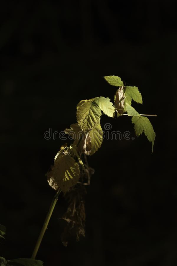 Leaves in the light stock image