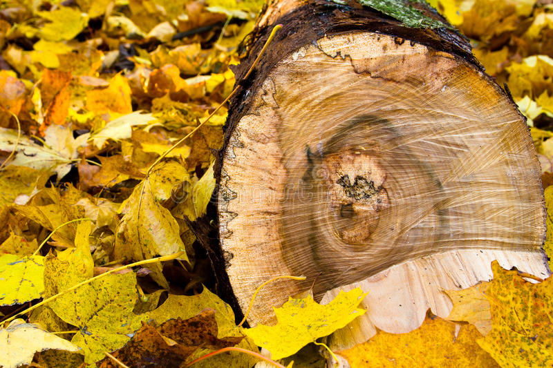Download Leaves and log stock image. Image of nature, tree, dead - 28255273