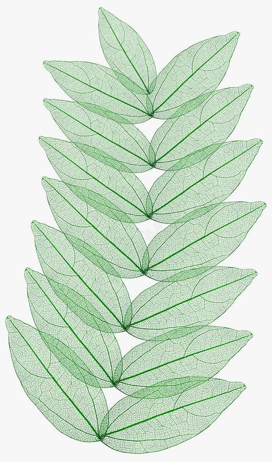 leaves macro isolated royalty free stock photo