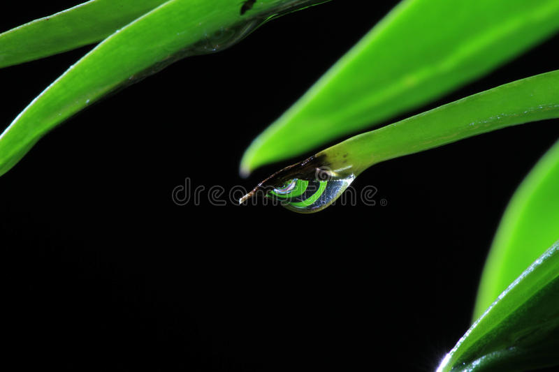 Download Leaves stock photo. Image of droplets, thailand, nature - 83711574