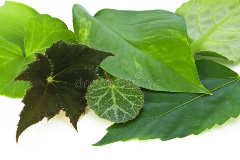 Leaves of northern indoor plants macro stock image