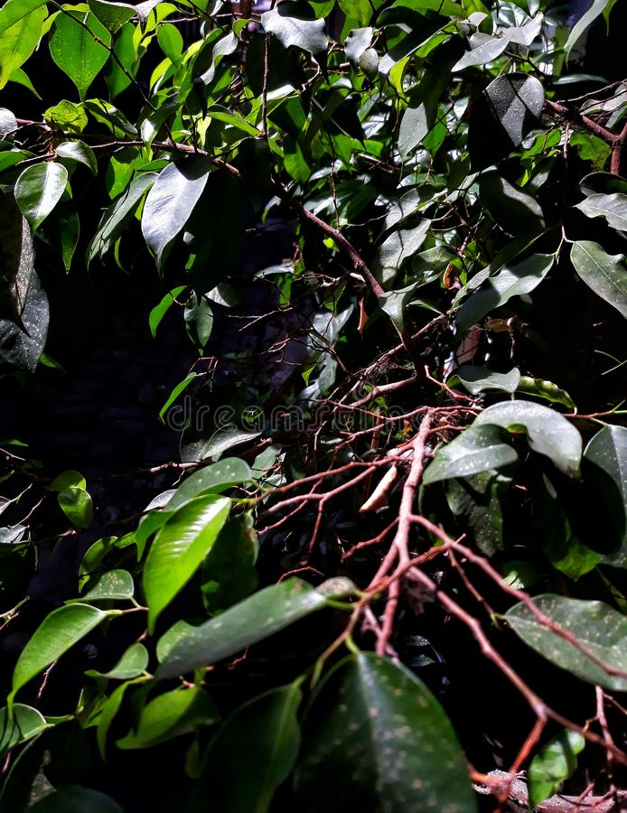 Leaves och ris fotografering för bildbyråer