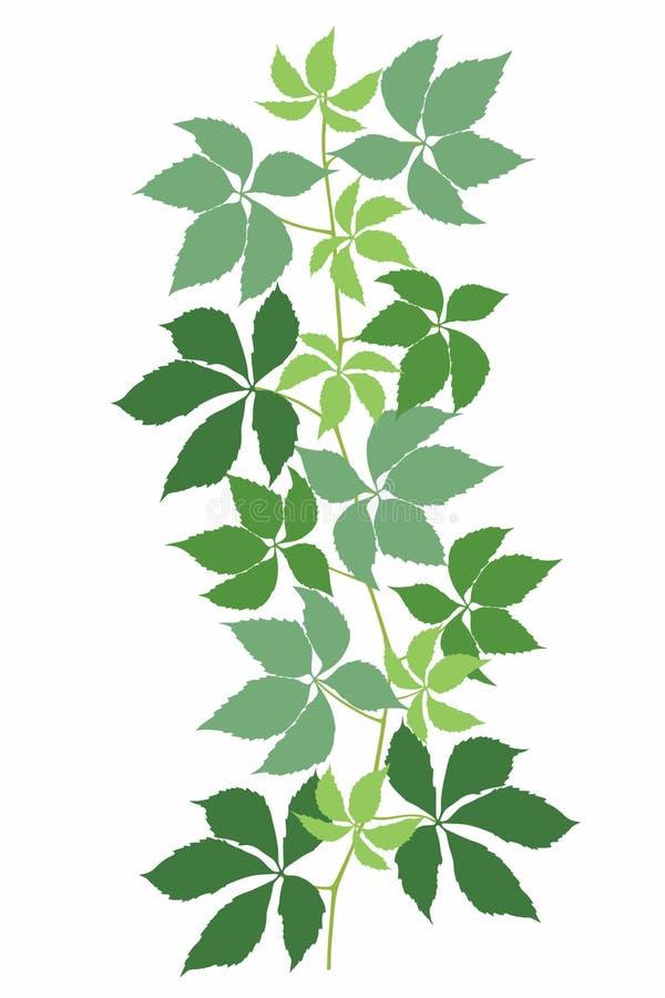 Leaves_one 免版税库存照片