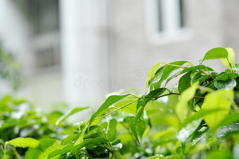 The leaves outside the house stock photography