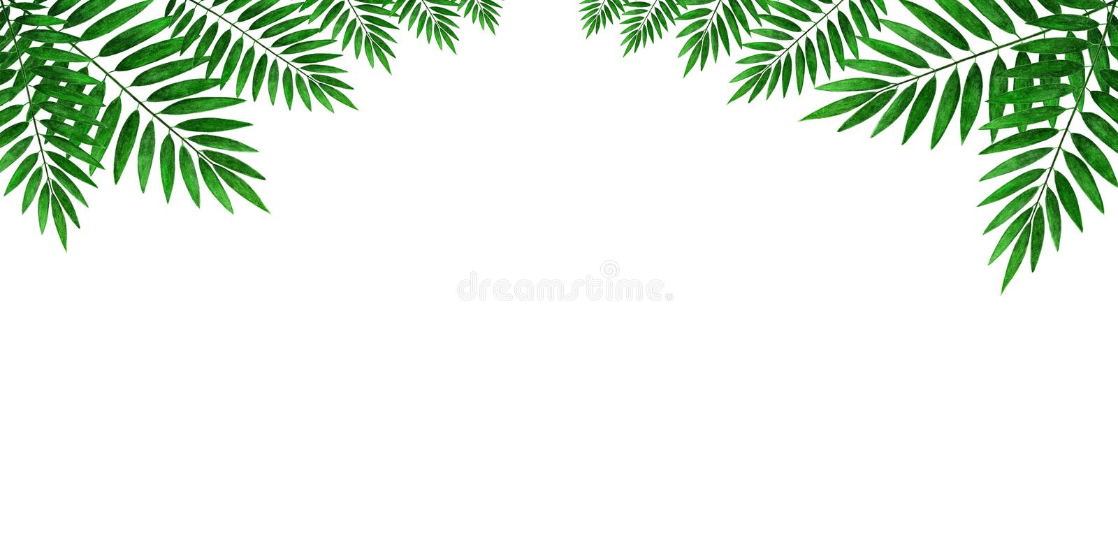 Leaves of palm trees on a white background. Sheet for decoration and writing text. stock image