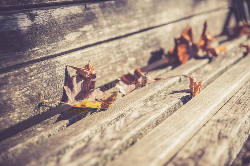 Leaves on a park bench, sunshine royalty free stock photo
