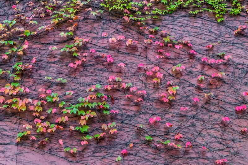 Leaves and pink wall stock photo