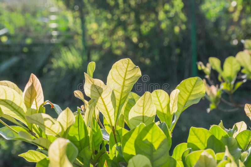 Leaves of plant royalty free stock photo