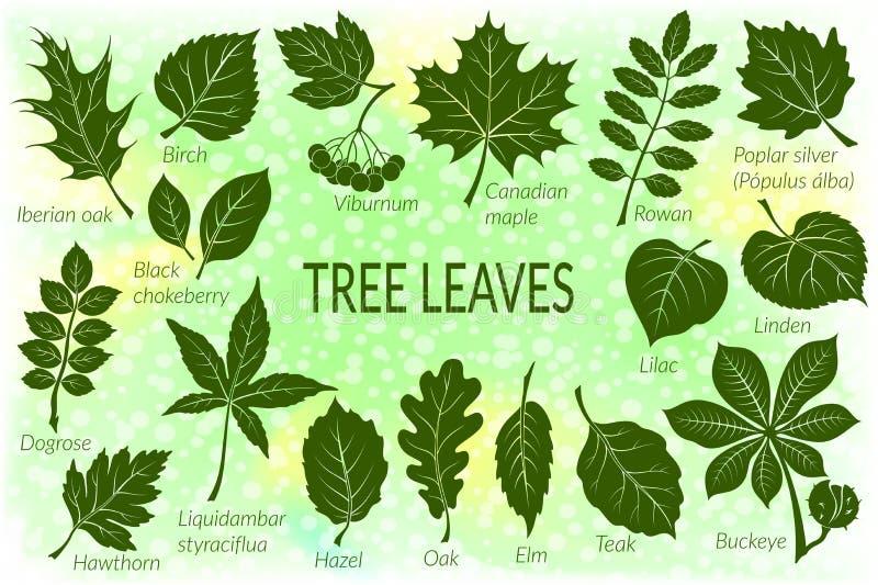 Leaves of Plants Pictogram Set. Pictograms Tree Leaves, Dogrose, Oak, Iberian Oak, Maple, Liquidambar, Hawthorn, Poplar Silver, Hazel, Elm, Birch Linden Rowan