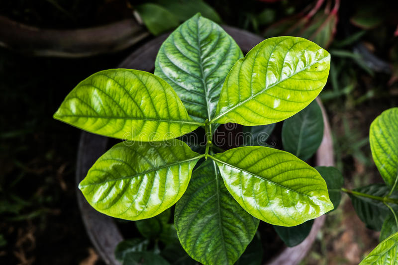 Leaves POV royalty free stock image