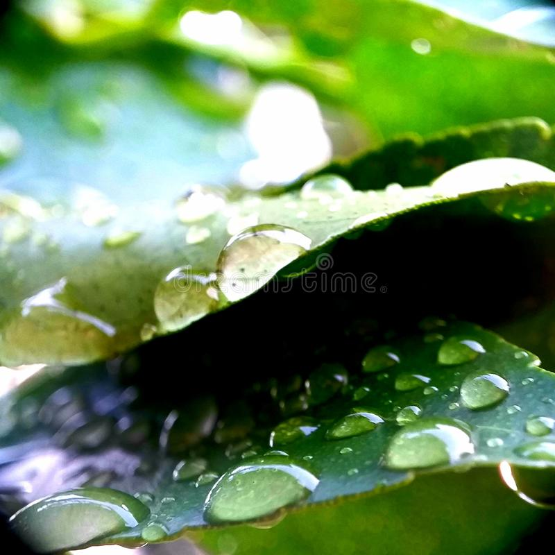 Leaves after rain. Drops of dew. Macro photo royalty free stock photos