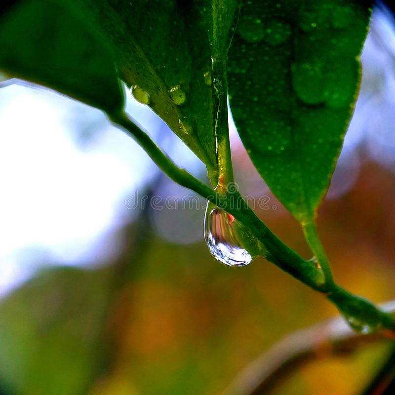 Leaves after rain. Drops of dew. Macro photo stock photo