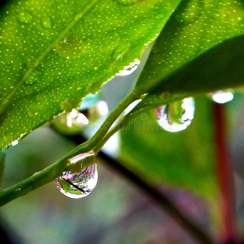 Leaves after rain. Drops of dew. Macro photo royalty free stock image