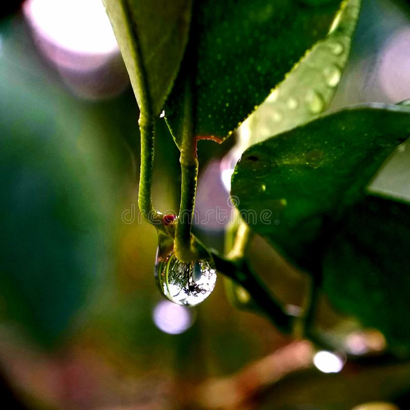 Leaves after rain. Drops of dew. Macro photo stock images