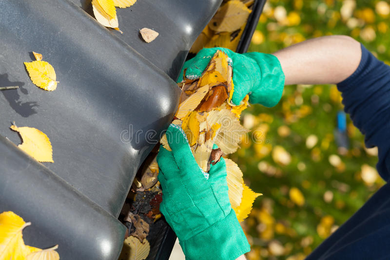 Leaves in rain gutter stock image