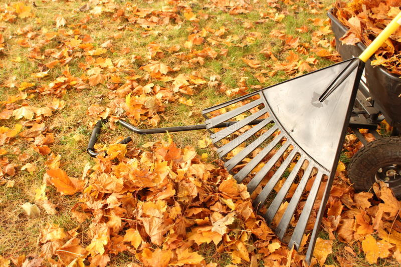 Leaves rake and wagon royalty free stock photos