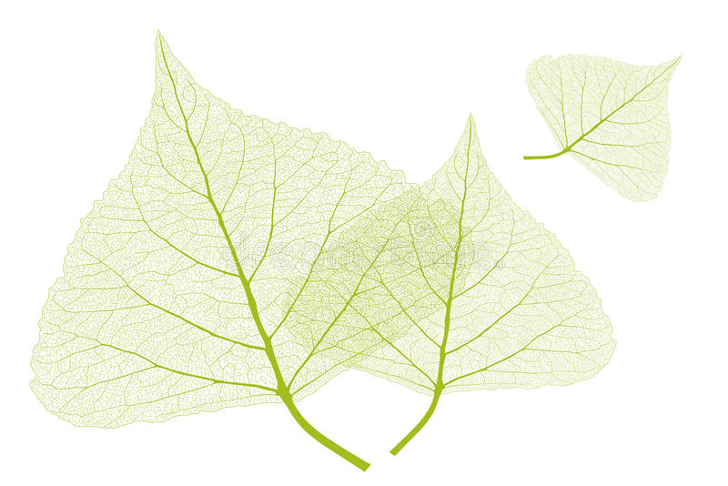 Leaves with ribs stock images
