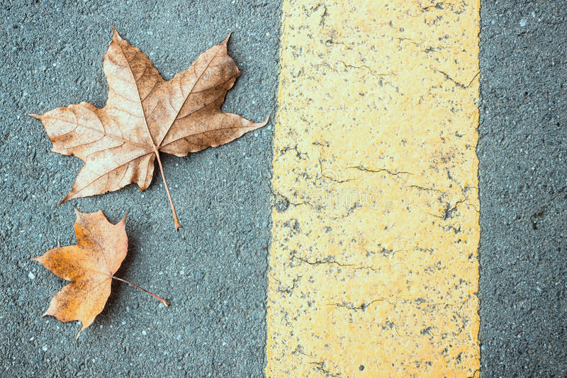 Leaves and Road stock photography