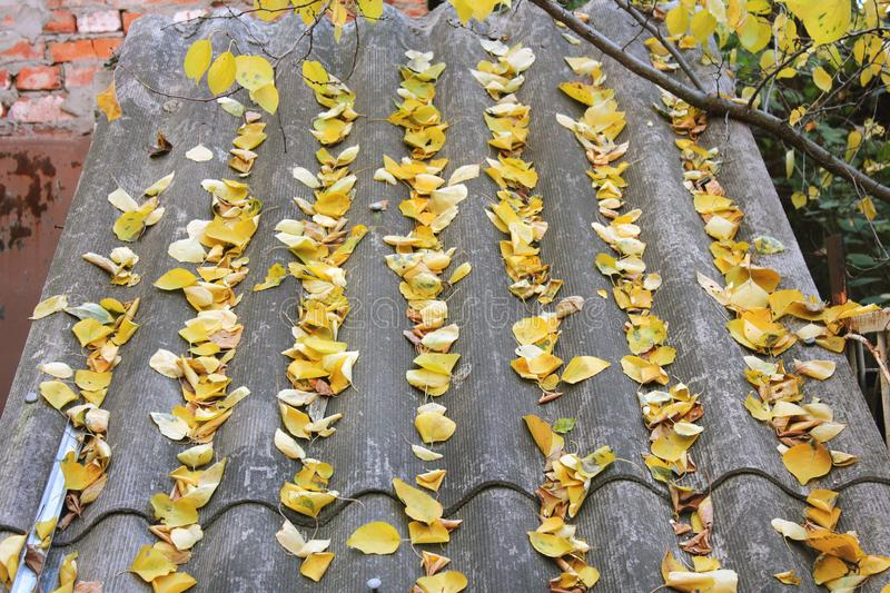 Leaves on the roof. Autumn royalty free stock photo